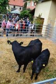Kulturherbst 2017 Kuh und Kalb